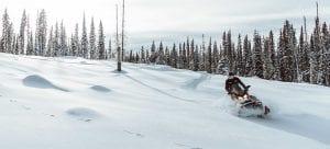 Ski-Doo SKANDIC WT 900 ACE 2022